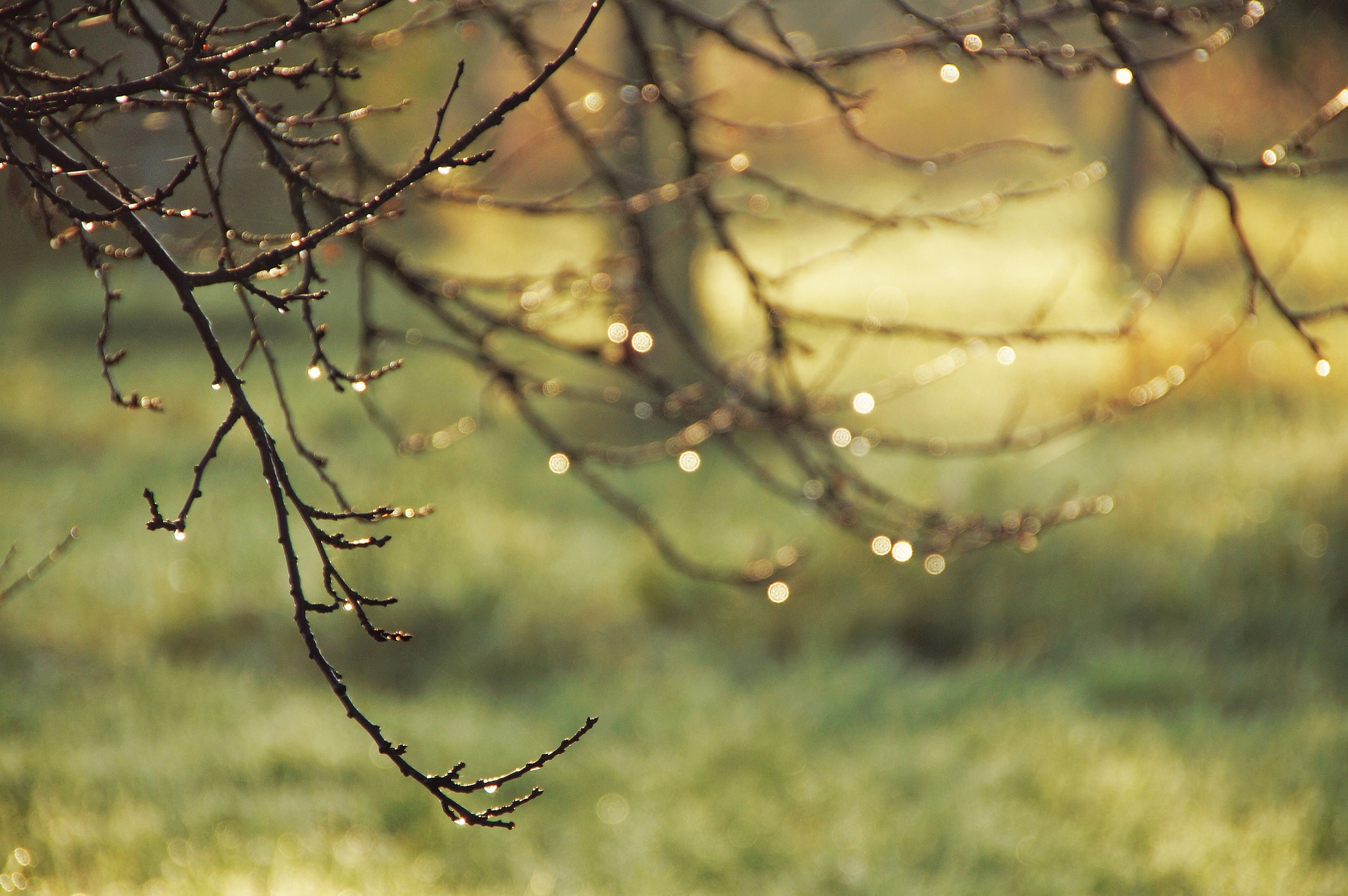 leafless branches in the morning sun covered with dew