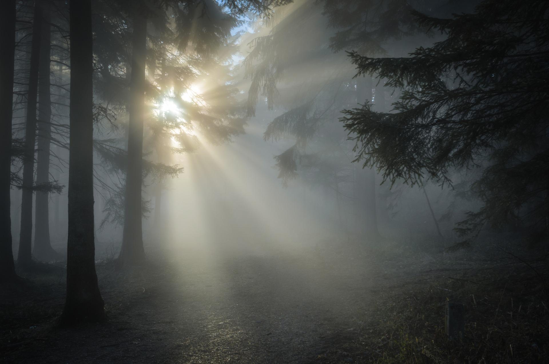 sun shine in a foggy forest