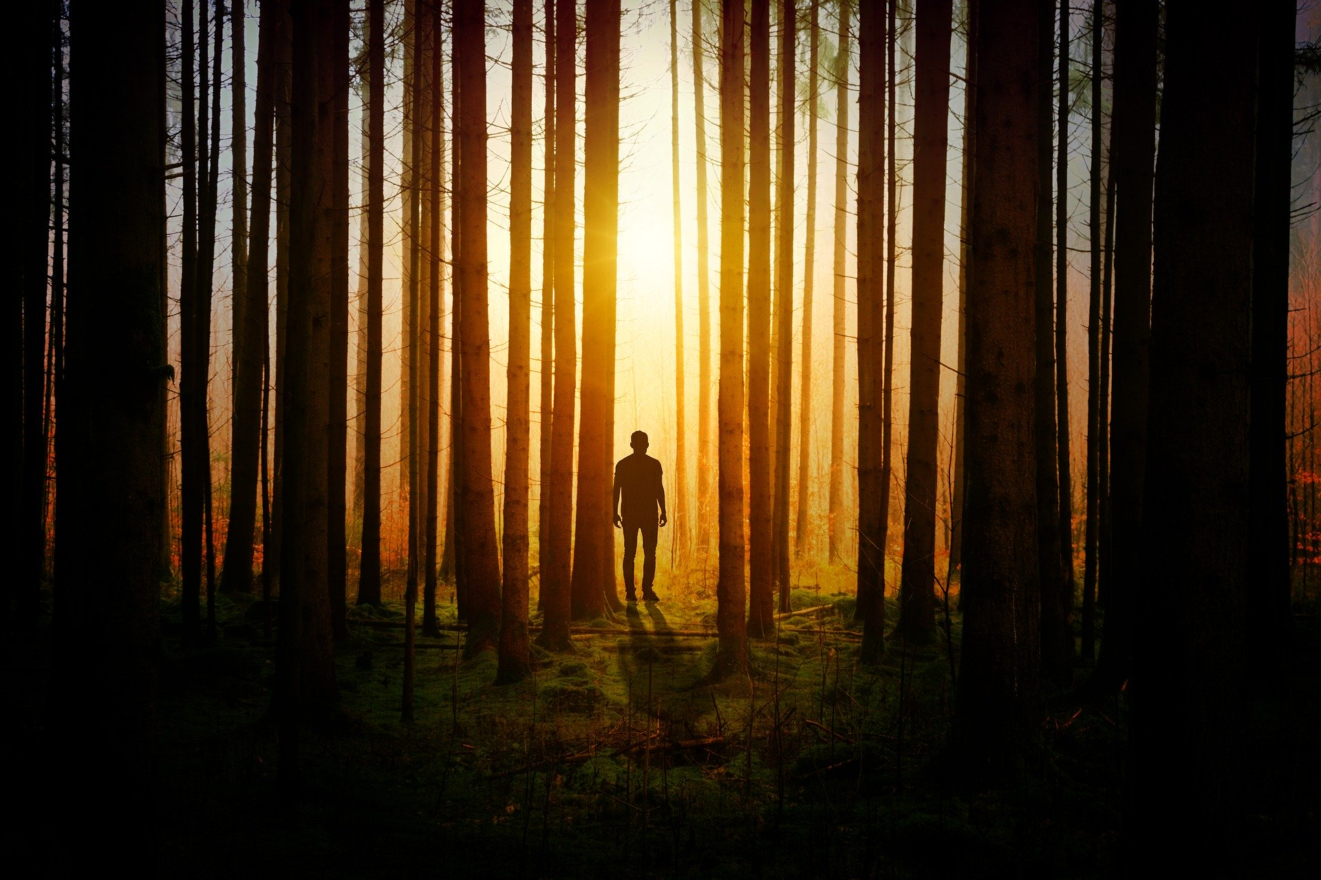 person in the woods looking at the sun
