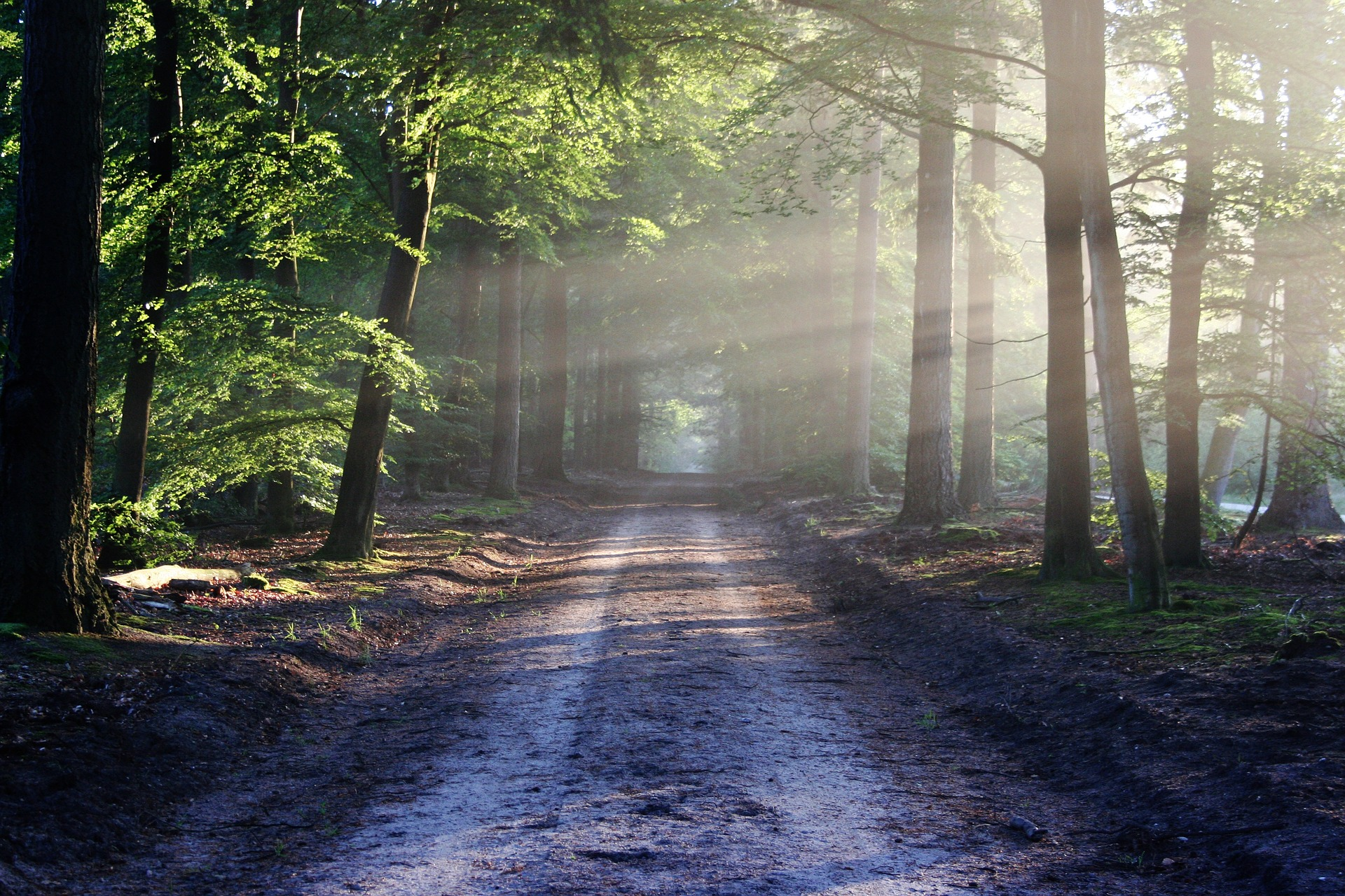 dirt road in forest