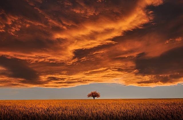 sun lit clouds over a single tree in a field