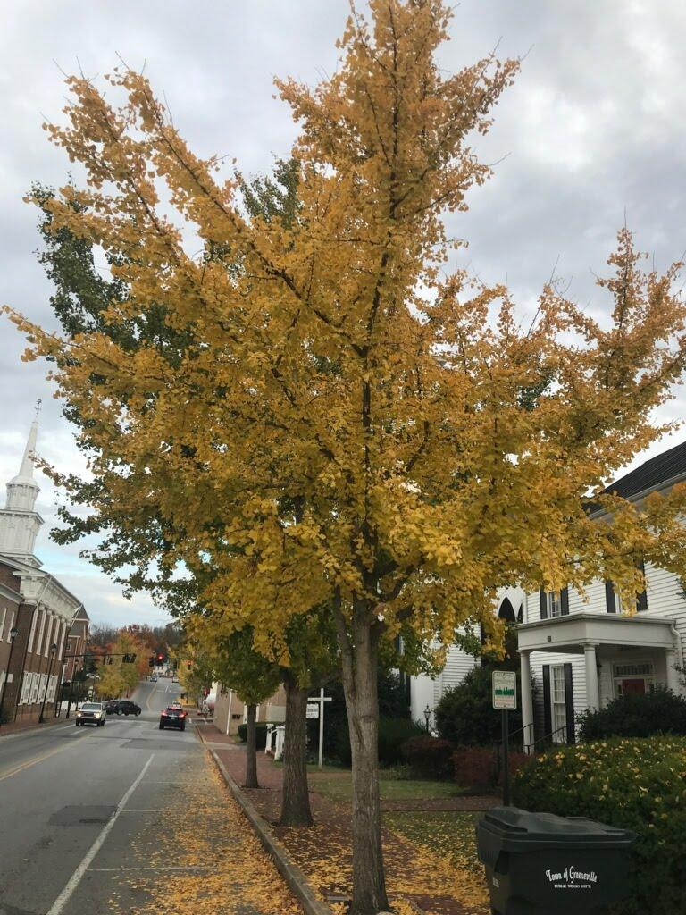 autumn downtown