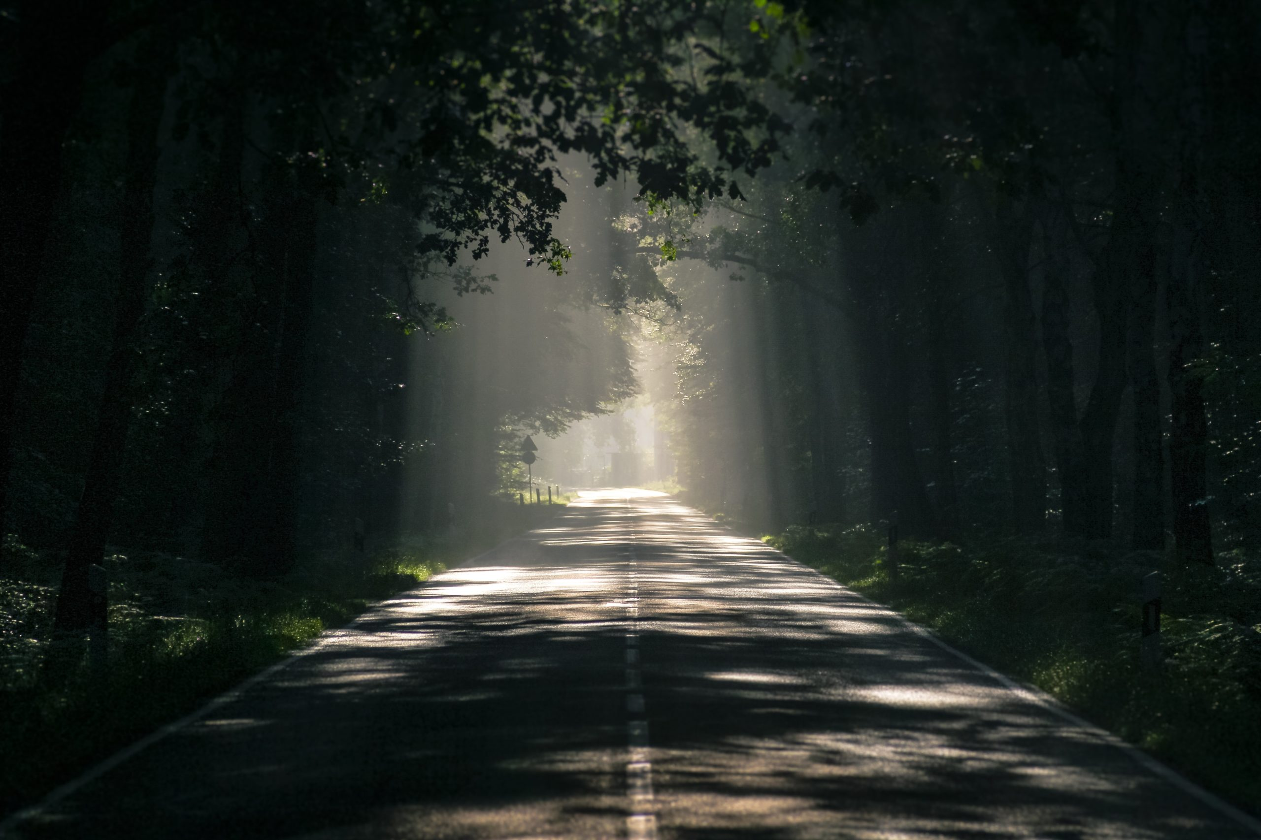 Tree covered road with sun peaking thru