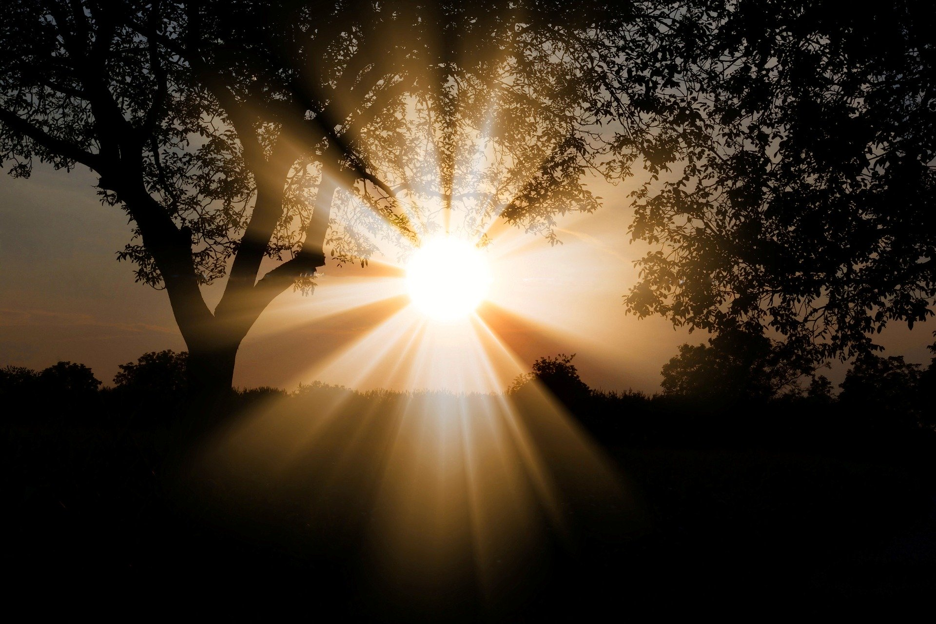 Rays of sunshine through the trees